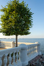 Lonely tree on a stone balcony on the sea background Royalty Free Stock Photo