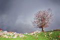 Lonely tree with stormy clouds red leaves Stock Photos