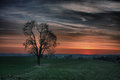 Lonely tree at sunset meadow with hdr Royalty Free Stock Images
