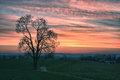 Lonely tree at sunset meadow with hdr Royalty Free Stock Image