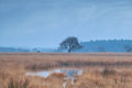 Lonely tree on swamp during misty morning duurswoude friesland netherlands Stock Photos