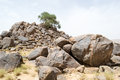 Lonely tree on top of a mountain of rocks in the desert #2 Royalty Free Stock Photo
