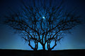 Lonely tree under blue night sky with moon and stars Royalty Free Stock Photos