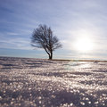 Lonely tree in winter on snow Royalty Free Stock Images