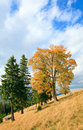 Lonely trees on autumn mountainside Stock Images