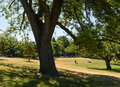 Lonely walker in riverdale park Royalty Free Stock Photo