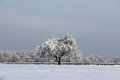 Lonely winter tree in the middle of nowhere all the nature is covered with white puffy snow and one is Royalty Free Stock Photography