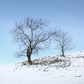 Lonely winter trees countryside background Royalty Free Stock Photo