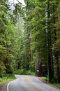 Lonesome country road through a forest in rural environment on fres summer morning in california redwoods at both sides of the Royalty Free Stock Image