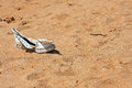 A lonesome lost shoe Royalty Free Stock Photo