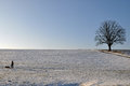 Lonesome oak in winter landscape tree with road snow white Stock Image