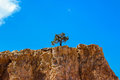 Lonesome tree lone on barren rock trying to survive the summer heat of arizona Royalty Free Stock Images