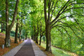 Long alley of green trees Royalty Free Stock Photo