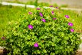 The long-awaited spring has come and beautiful flowers are blooming Royalty Free Stock Photo