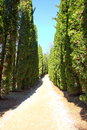 The long cypress alley Royalty Free Stock Photo