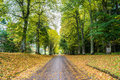 Long Driveway in Autumn Stock Images