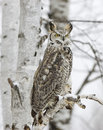 Long eared owl Stock Photos