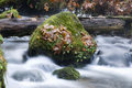 Long exposure water flowing down stream moss covered rocks river bank reveals the beauty of leaves and boulders in the Royalty Free Stock Images