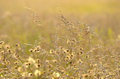 Long grass meadow close up view Royalty Free Stock Images