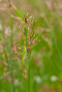 Long grass meadow closeup Stock Photography