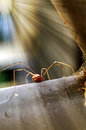 Long Leg Spider With Nest in Sunlight Royalty Free Stock Photos