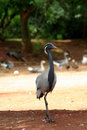 Long legged bird outdoors Royalty Free Stock Image