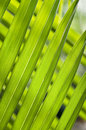 Long narrow green leaves tilted Royalty Free Stock Images
