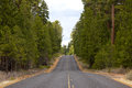 Long Paved Road in Forest Stock Photography