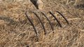 Long prongs of pitchfork on the hay on the farm in countryside Royalty Free Stock Images