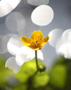 Long stem buttercup against water reflection Stock Photos