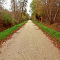 Long straight road path in forest bordered by green grass and trees the Royalty Free Stock Photos