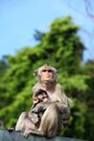Long-Tailed Macaque with her sweet baby. Stock Photography