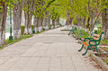 Long tree alley Royalty Free Stock Photo