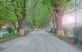 Long tree alley Royalty Free Stock Photo
