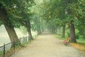 Long tree alley with a footpath in fog disappearing Royalty Free Stock Photos