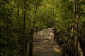 Long wood bridge in mangrove forest, Thailand. Royalty Free Stock Photo