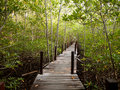 Long wood bridge in mangrove forest, Thailand Royalty Free Stock Photo