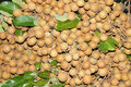 Longan the background of fresh fruits Stock Images