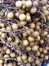 Longan fruits the sweet Stock Photo