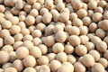 Longan secado Fotos de Stock Royalty Free