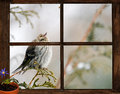 Longing for spring pine siskin bird in a snowstorm peeks into a small farm house bedroom window at a little bug on the inside Stock Photo
