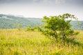 Lonley bush in the meadow green Stock Photo