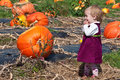 Look at all these pumpkins! Royalty Free Stock Photo