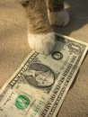 Look under legs Royalty Free Stock Photo