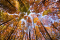 Look up in the autumn forest... Stock Images