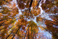 Look up in the autumn forest... Royalty Free Stock Image