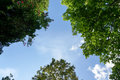 Look Up To The Sky And Trees