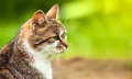 Looking cat in grass green Royalty Free Stock Photography
