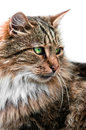Looking cat portrait side view Royalty Free Stock Photos