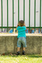 Looking through the fence boy a seen from behind Royalty Free Stock Photography